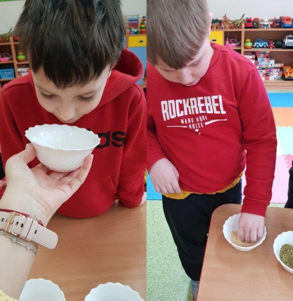 Dzieci z oddziału przedszkolnego wąchają zioła i przyprawy