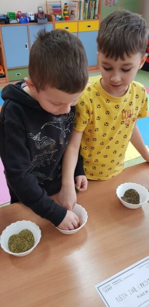Dzieci z oddziału przedszkolnego dotykają zioła i przyprawy